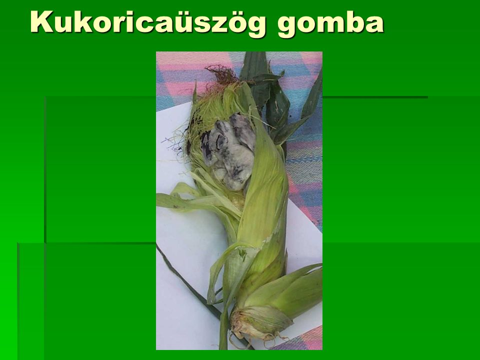 Kukoricaüszög gomba