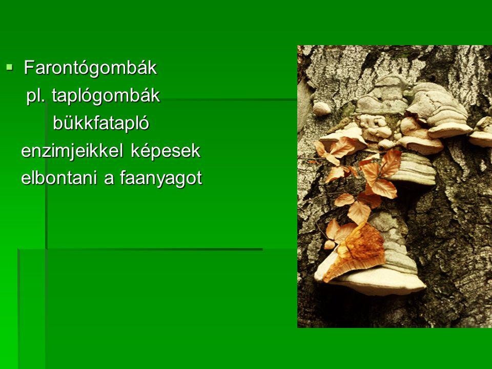 Farontógombák pl. taplógombák bükkfatapló enzimjeikkel képesek elbontani a faanyagot