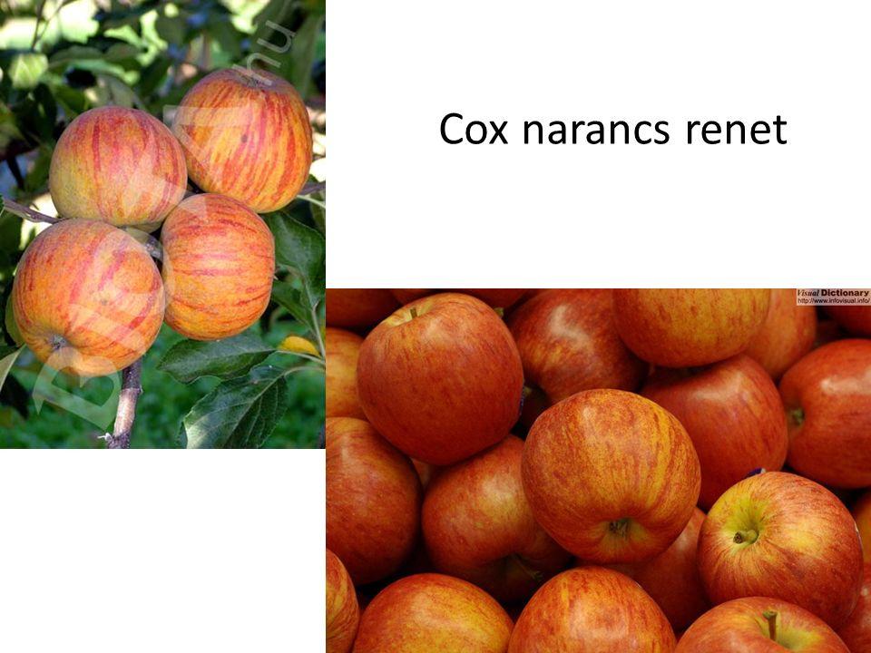 Cox narancs renet