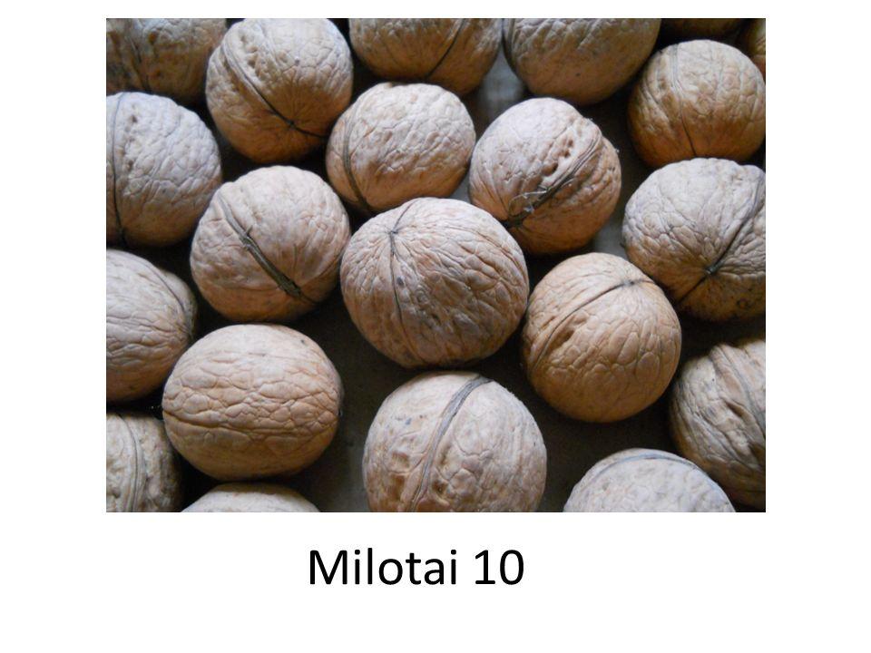 Milotai 10