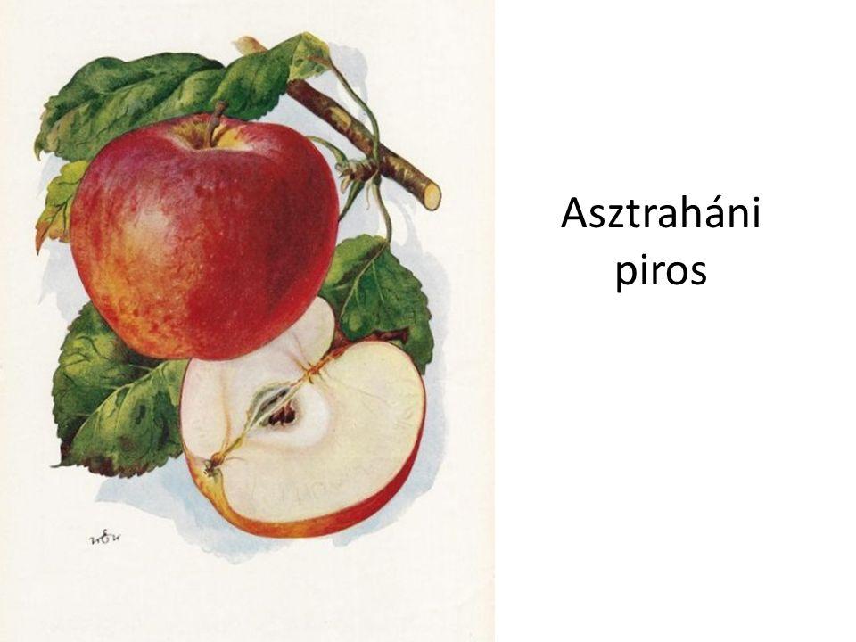 Asztraháni piros