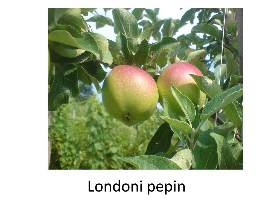 Londoni pepin