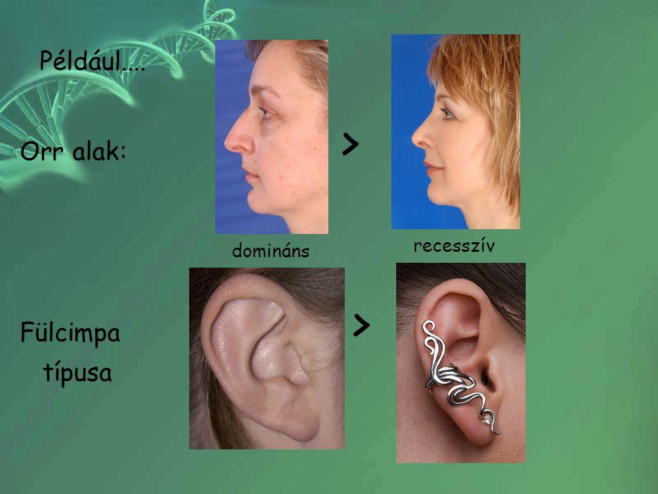 Például.... Orr alak: > Fülcimpa > típusa.