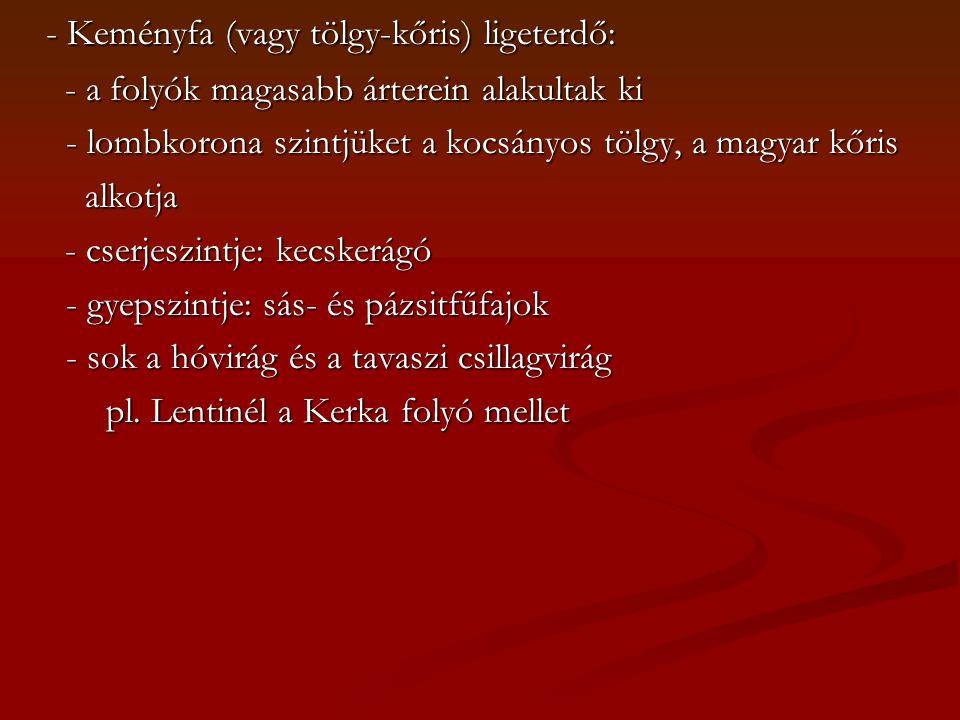 - Keményfa (vagy tölgy-kőris) ligeterdő: