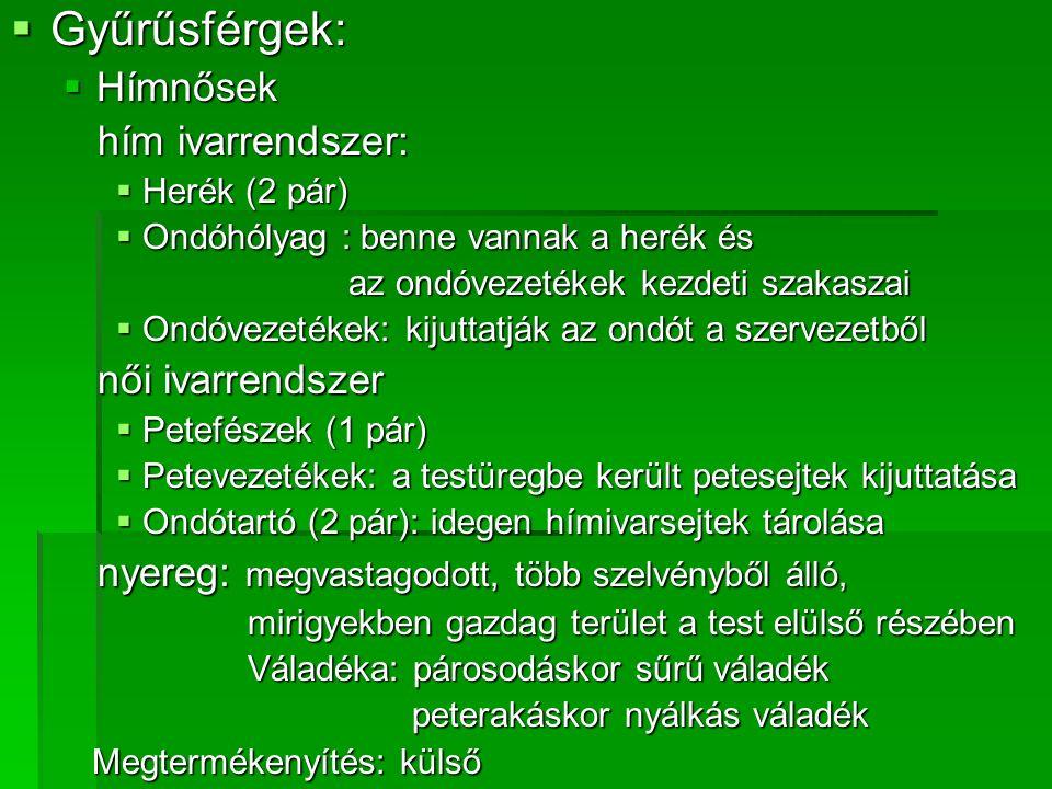 Gyűrűsférgek: Hímnősek hím ivarrendszer: női ivarrendszer