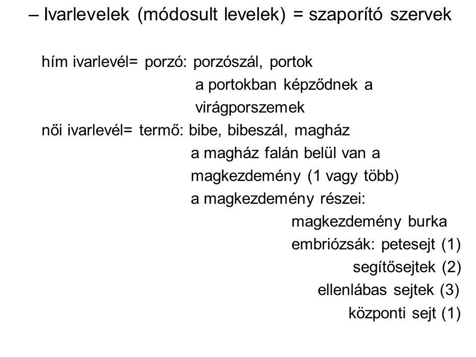 Ivarlevelek (módosult levelek) = szaporító szervek