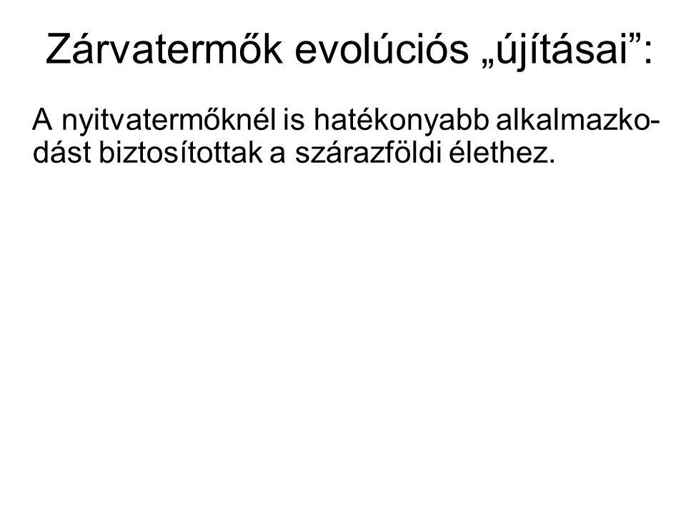 """Zárvatermők evolúciós """"újításai :"""