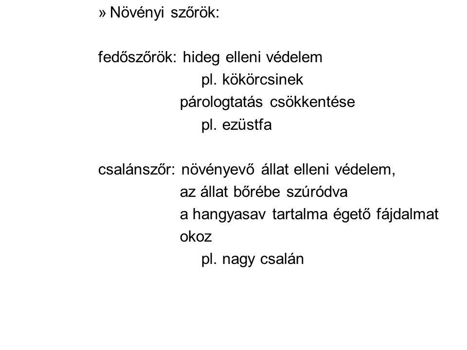Növényi szőrök: fedőszőrök: hideg elleni védelem. pl. kökörcsinek. párologtatás csökkentése. pl. ezüstfa.