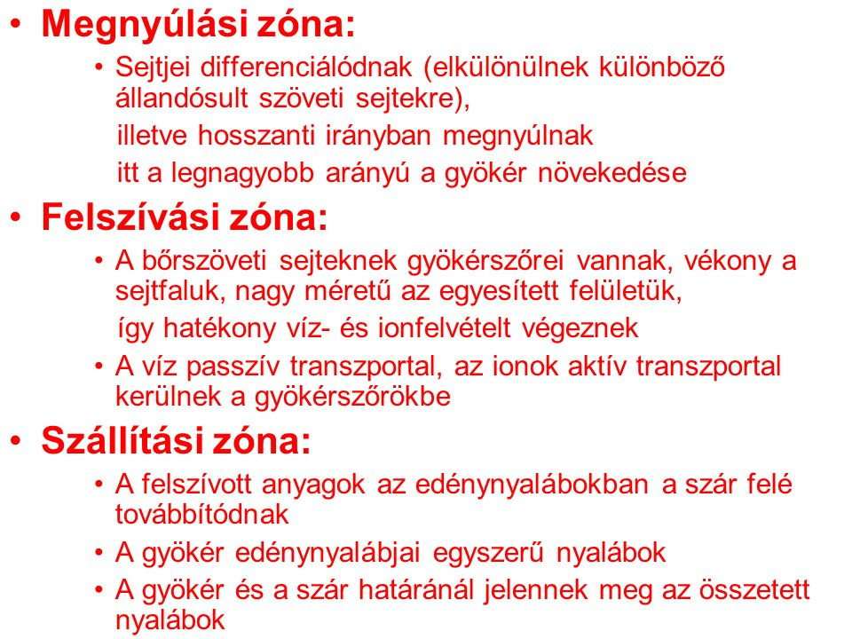 Megnyúlási zóna: Felszívási zóna: Szállítási zóna: