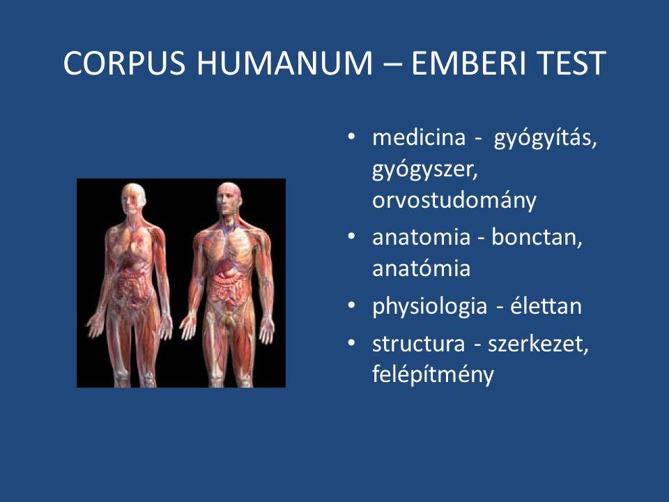 CORPUS HUMANUM – EMBERI TEST