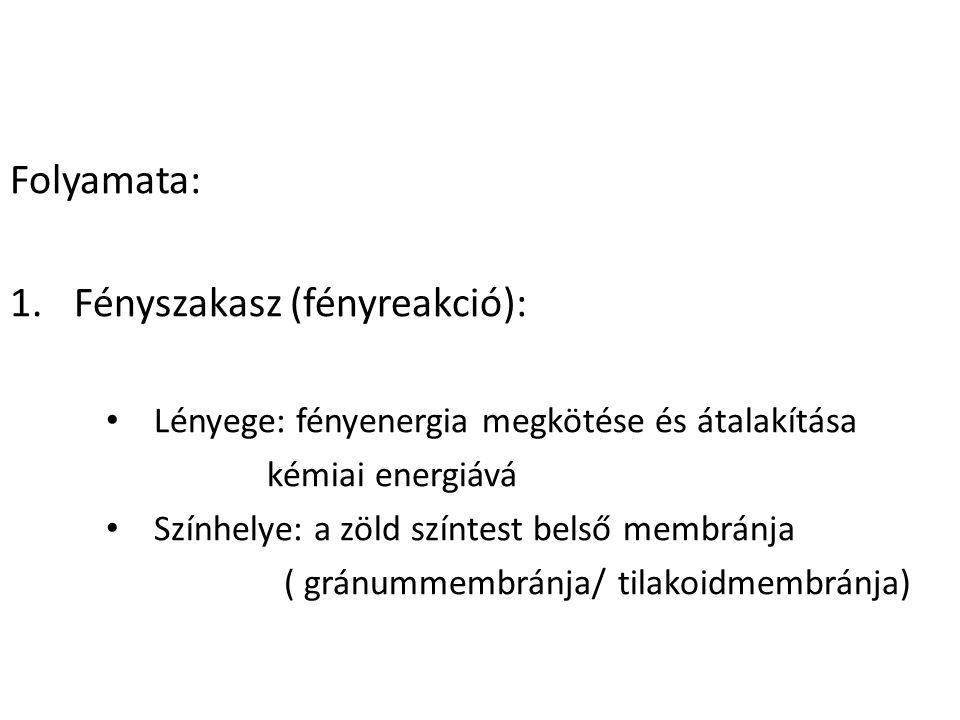 Fényszakasz (fényreakció):