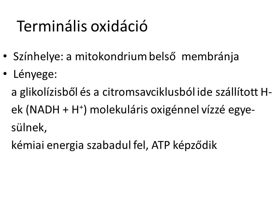 Terminális oxidáció Színhelye: a mitokondrium belső membránja Lényege: