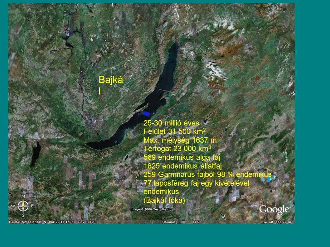 Bajkál 25-30 millió éves Felület 31 500 km2 Max. mélység 1637 m
