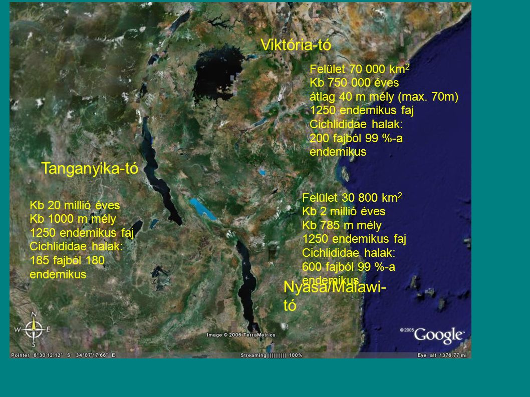 Viktória-tó Tanganyika-tó Nyasa/Malawi-tó Felület 70 000 km2