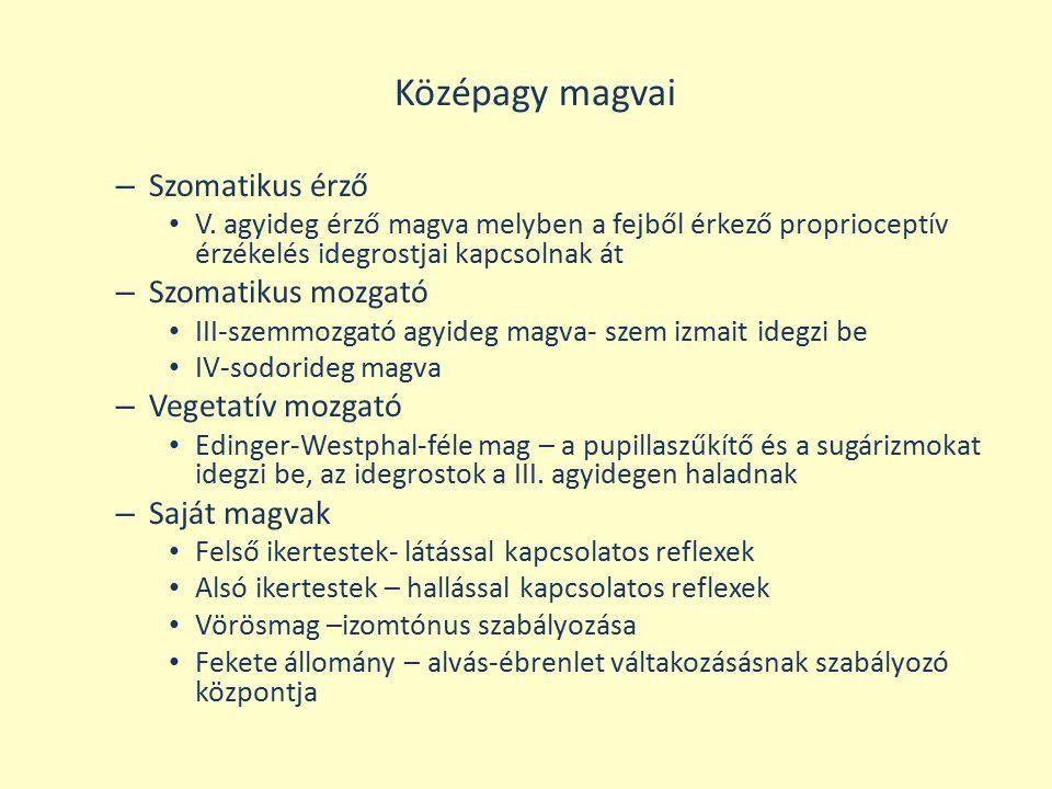 Középagy magvai Szomatikus érző Szomatikus mozgató Vegetatív mozgató
