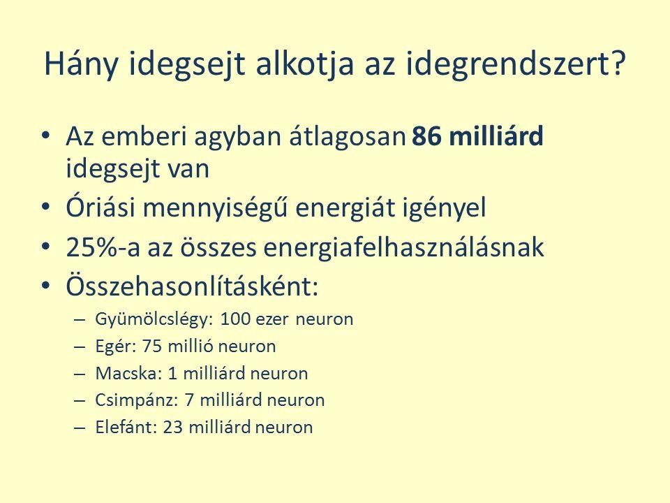 Hány idegsejt alkotja az idegrendszert