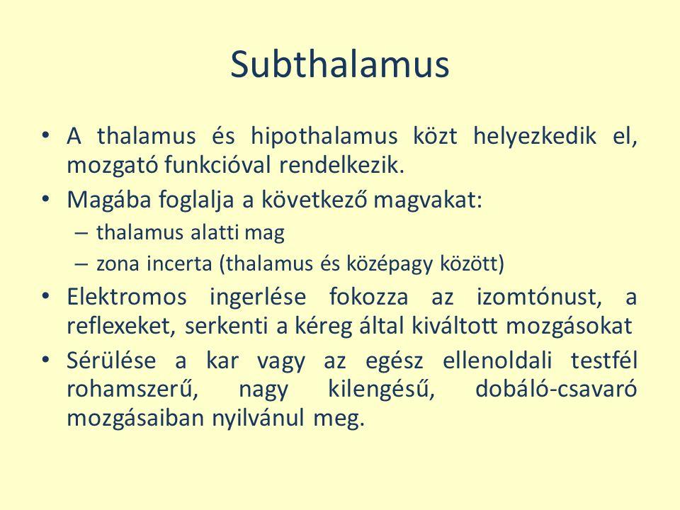 Subthalamus A thalamus és hipothalamus közt helyezkedik el, mozgató funkcióval rendelkezik. Magába foglalja a következő magvakat: