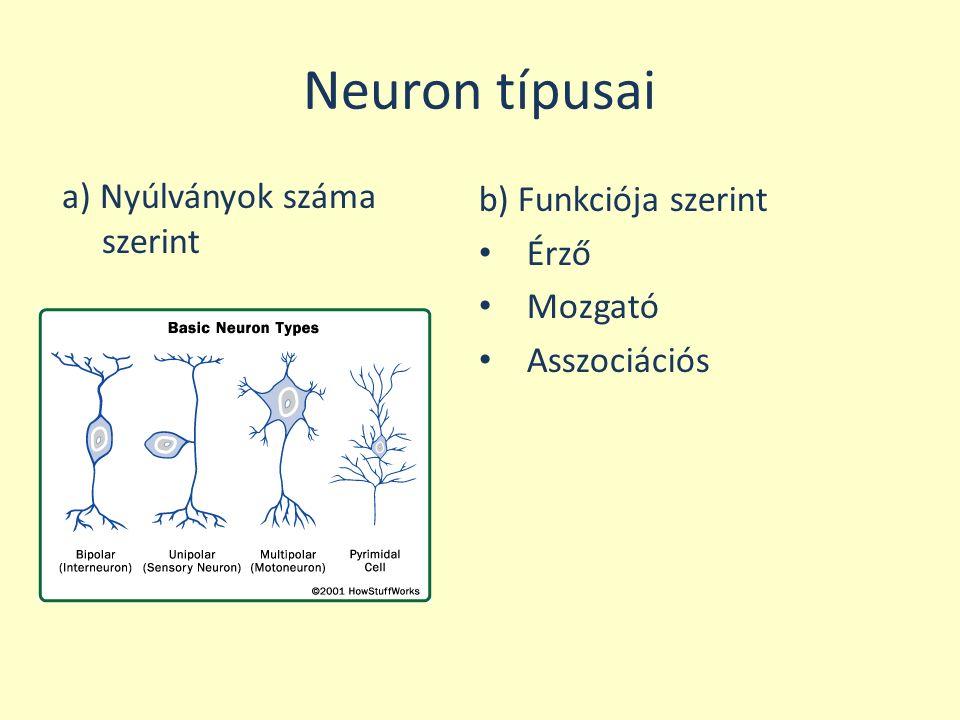 Neuron típusai a) Nyúlványok száma szerint b) Funkciója szerint Érző