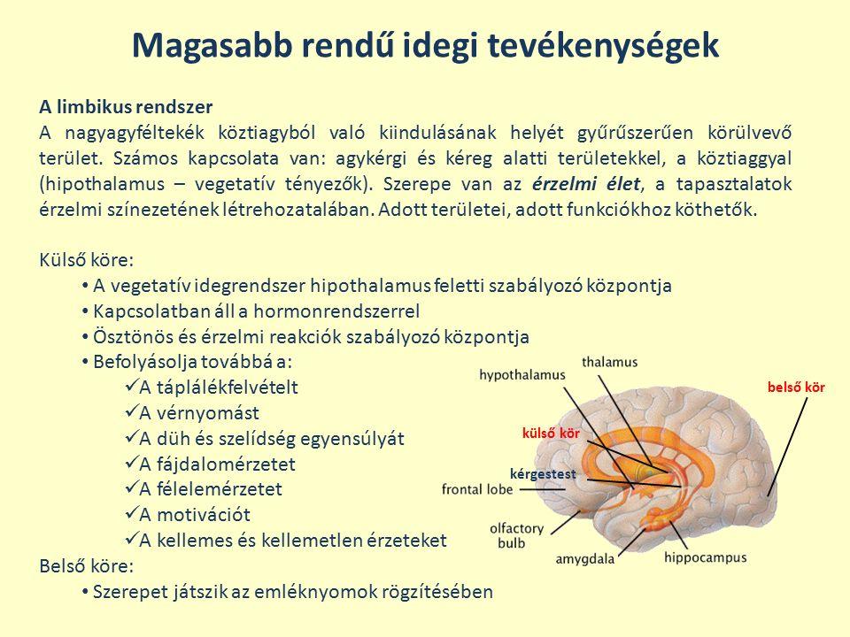Magasabb rendű idegi tevékenységek