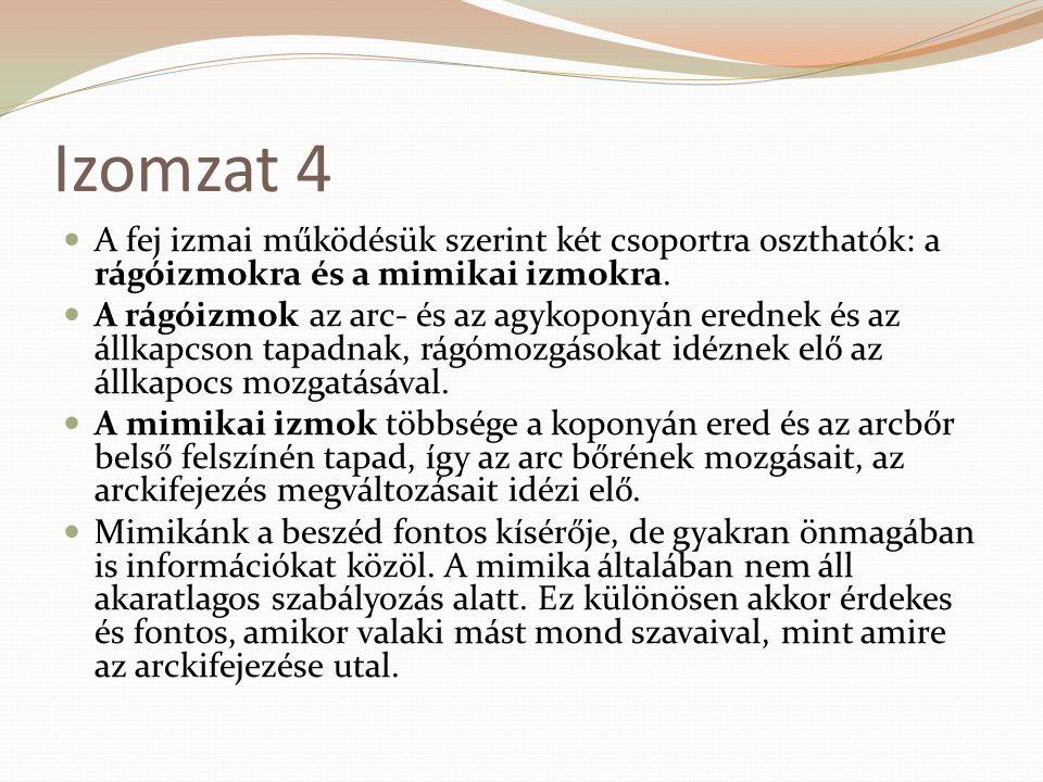 Izomzat 4 A fej izmai működésük szerint két csoportra oszthatók: a rágóizmokra és a mimikai izmokra.