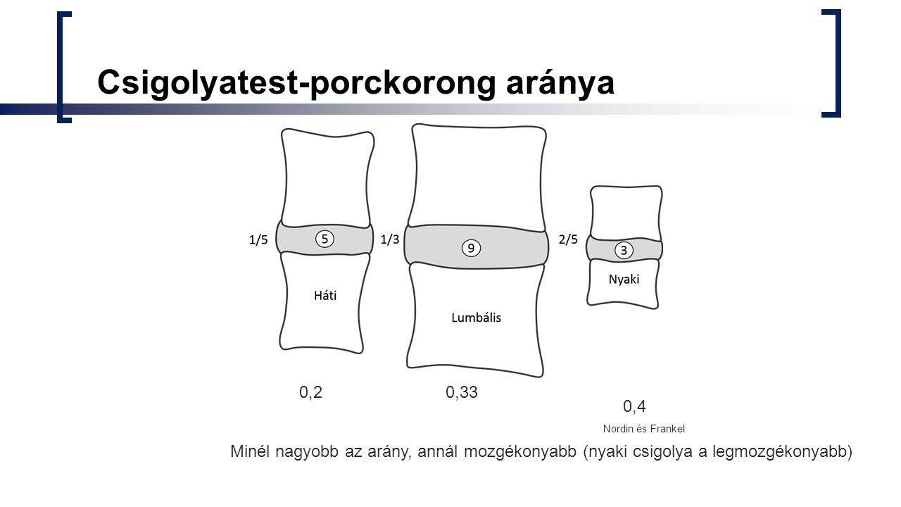 Csigolyatest-porckorong aránya