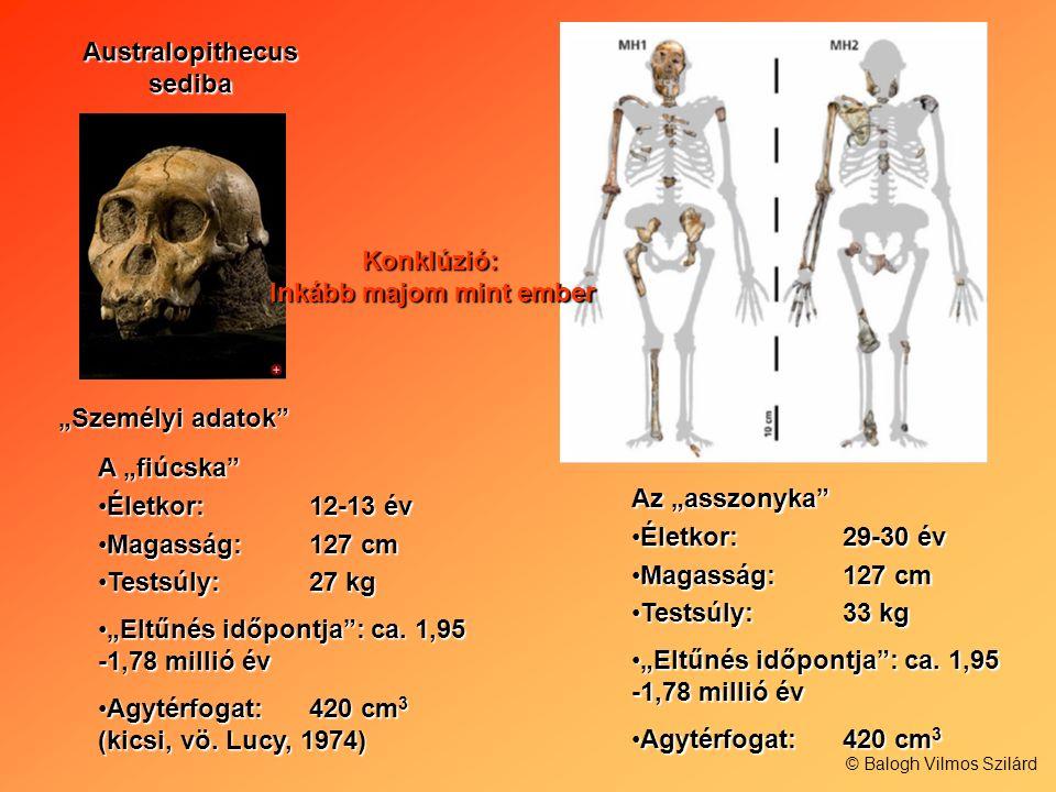 Australopithecus sediba Inkább majom mint ember