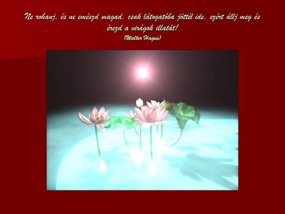 Ne rohanj, és ne emészd magad, csak látogatóba jöttél ide, ezért állj meg és érezd a virágok illatát.