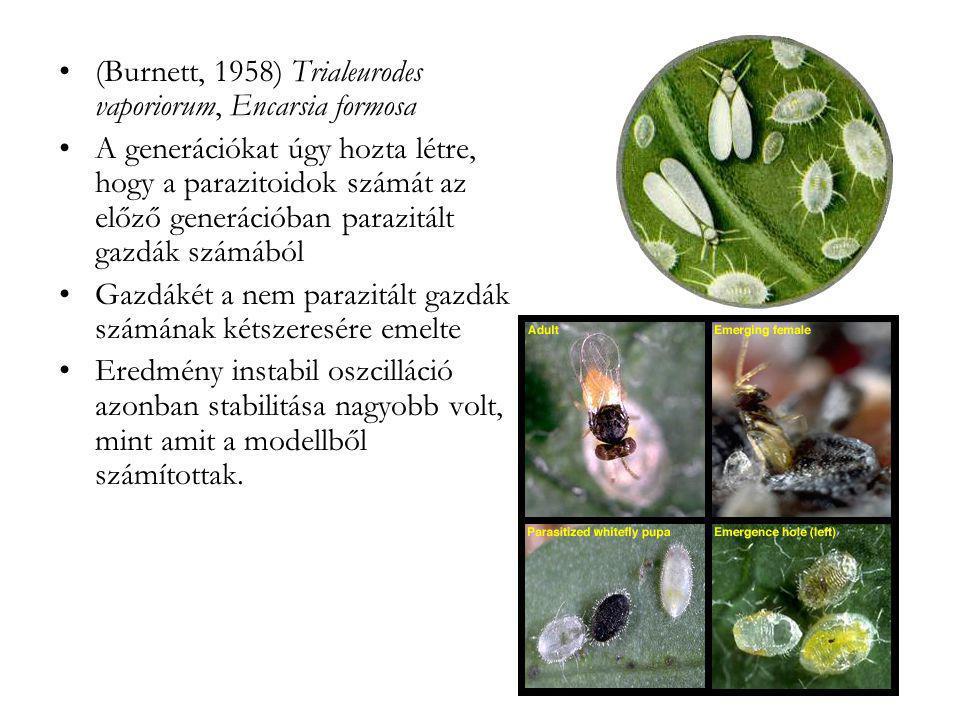 (Burnett, 1958) Trialeurodes vaporiorum, Encarsia formosa