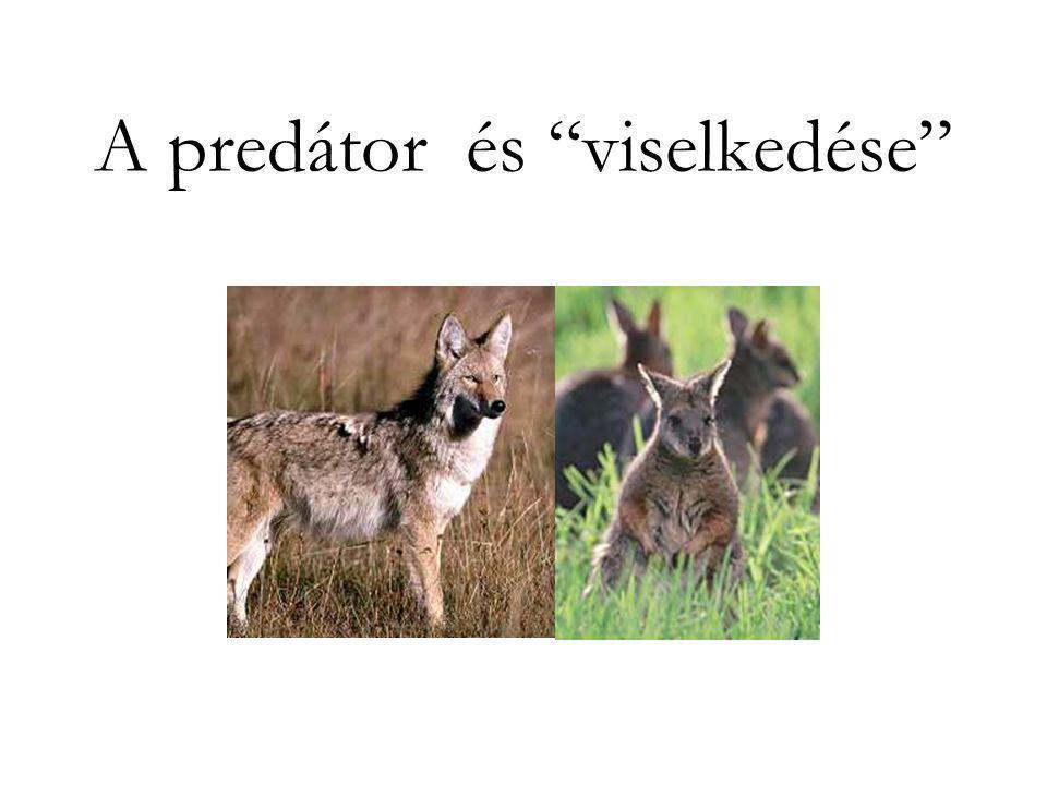 A predátor és viselkedése