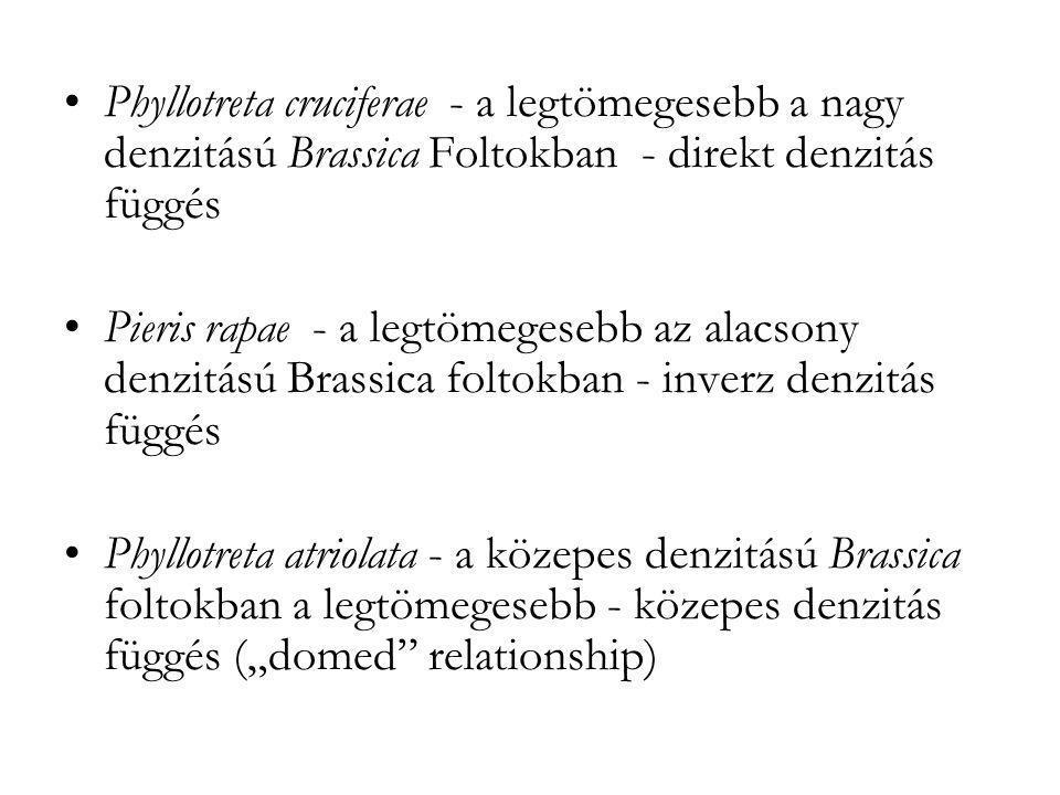 Phyllotreta cruciferae - a legtömegesebb a nagy denzitású Brassica Foltokban - direkt denzitás függés