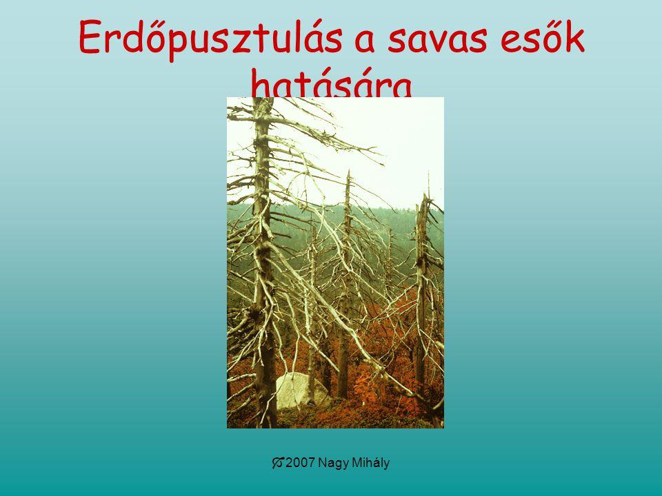 Erdőpusztulás a savas esők hatására