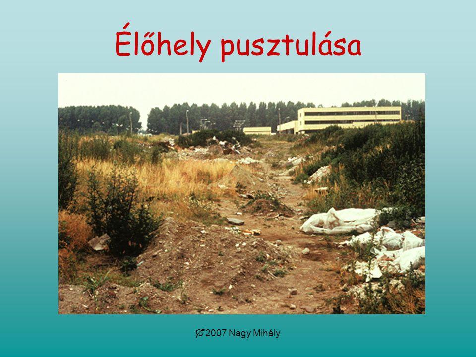 Élőhely pusztulása 2007 Nagy Mihály