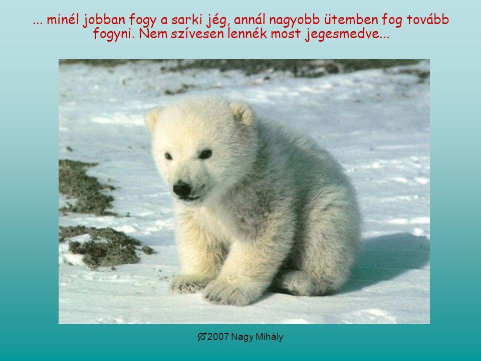 minél jobban fogy a sarki jég, annál nagyobb ütemben fog tovább fogyni