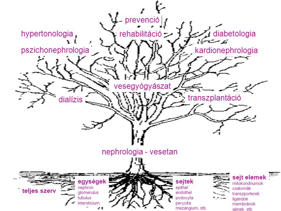 prevenció hypertonologia rehabilitáció diabetologia pszichonephrologia