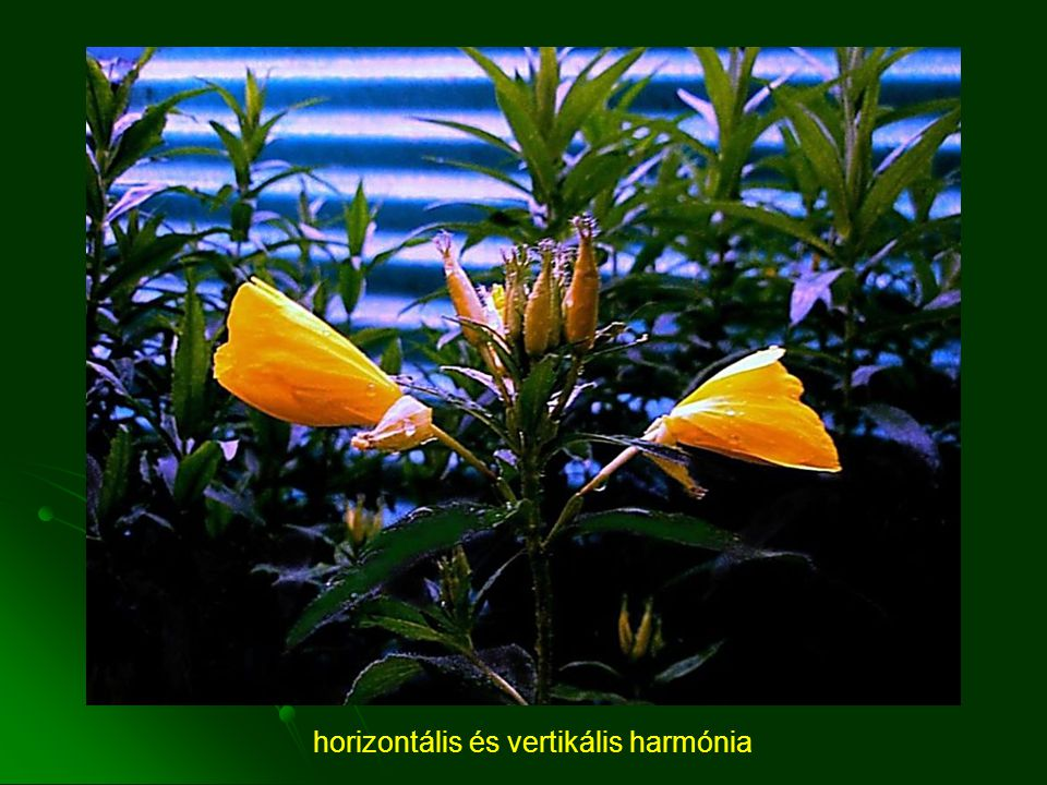 horizontális és vertikális harmónia