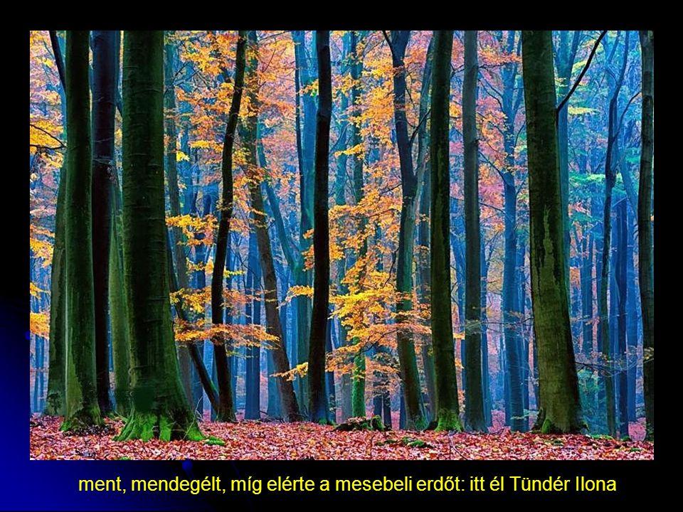 ment, mendegélt, míg elérte a mesebeli erdőt: itt él Tündér Ilona