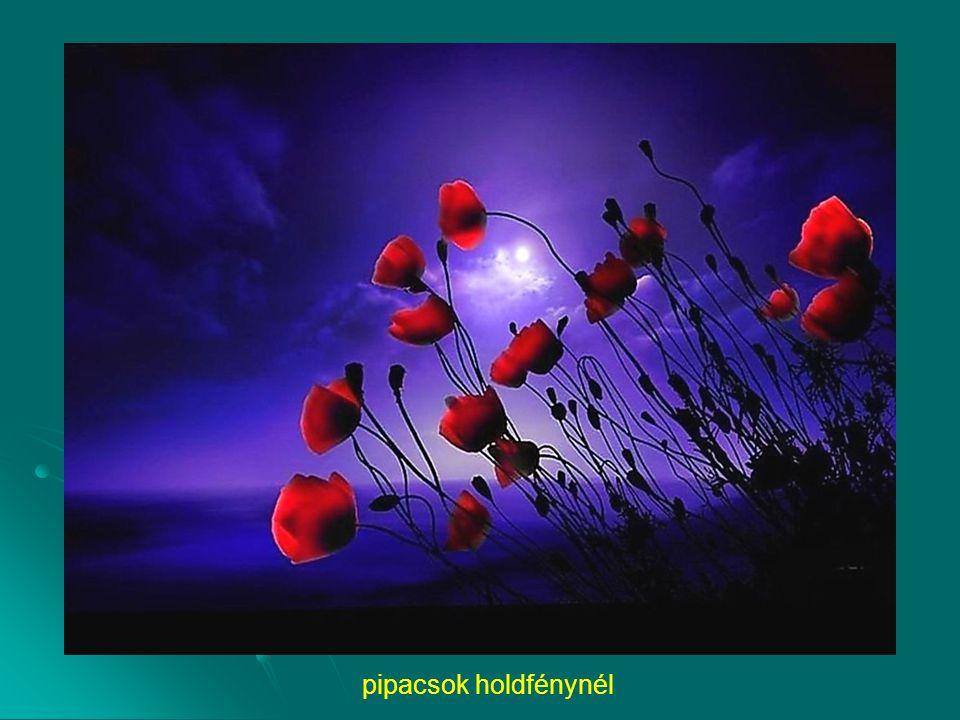 pipacsok holdfénynél