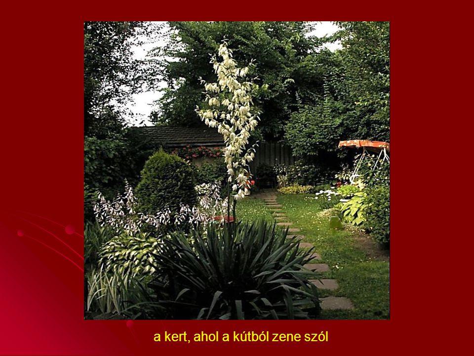 a kert, ahol a kútból zene szól