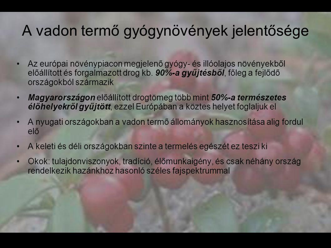 A vadon termő gyógynövények jelentősége