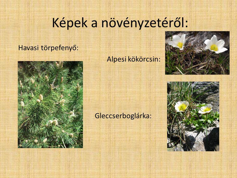 Képek a növényzetéről:
