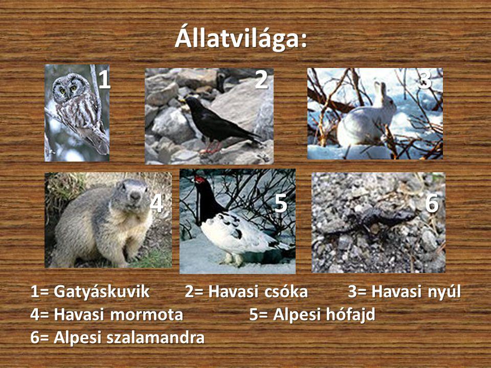 Állatvilága: 1 2 3 4 5 6 1= Gatyáskuvik 2= Havasi csóka 3= Havasi nyúl