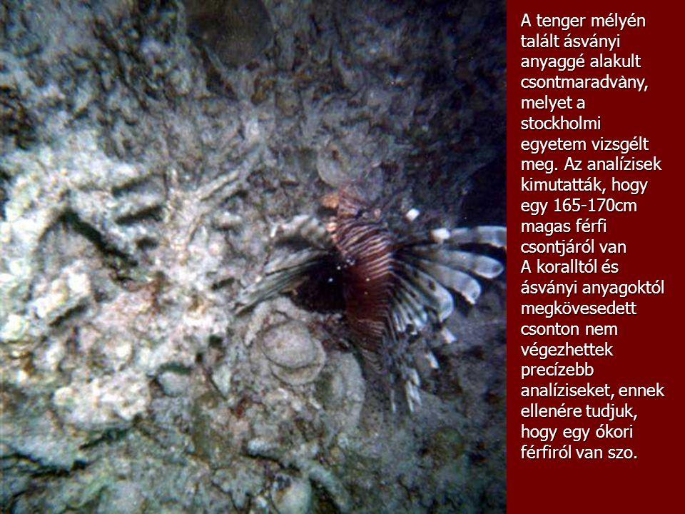A tenger mélyén talált ásványi anyaggé alakult csontmaradvàny, melyet a stockholmi egyetem vizsgélt meg. Az analízisek kimutatták, hogy egy 165-170cm magas férfi csontjáról van
