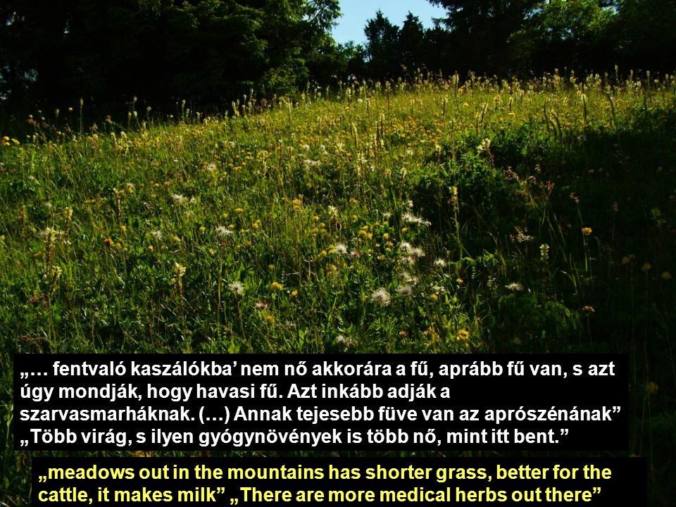"""""""… fentvaló kaszálókba' nem nő akkorára a fű, aprább fű van, s azt úgy mondják, hogy havasi fű. Azt inkább adják a szarvasmarháknak. (…) Annak tejesebb füve van az aprószénának """"Több virág, s ilyen gyógynövények is több nő, mint itt bent."""