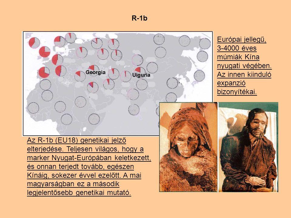 R-1b Európai jellegű, 3-4000 éves múmiák Kína nyugati végében. Az innen kiinduló expanzió bizonyítékai.