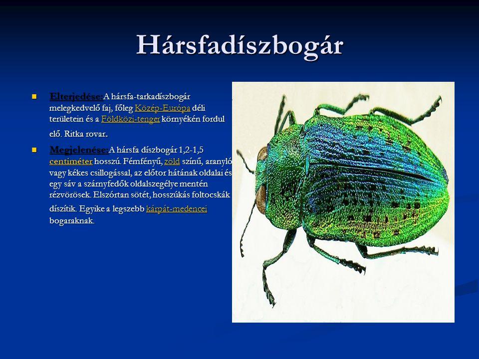 Hársfadíszbogár