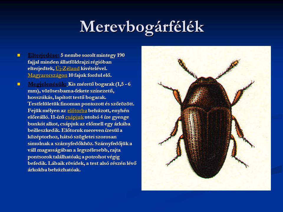 Merevbogárfélék