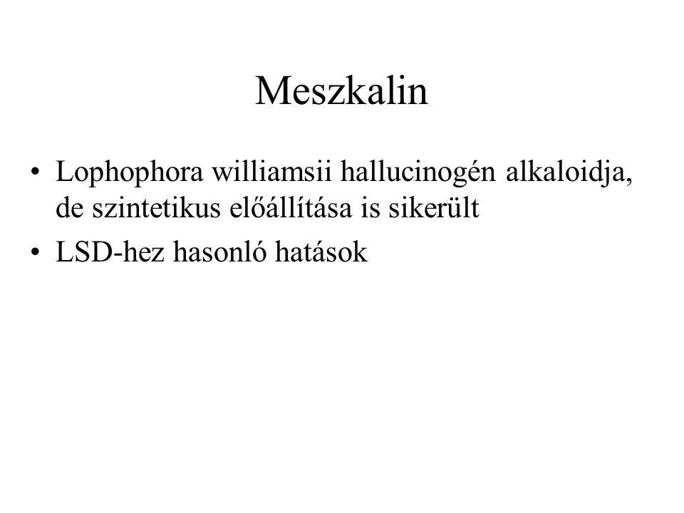 Meszkalin Lophophora williamsii hallucinogén alkaloidja, de szintetikus előállítása is sikerült.