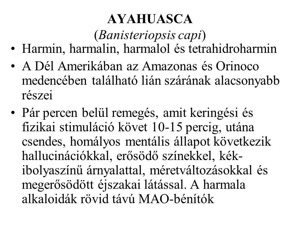 AYAHUASCA (Banisteriopsis capi)