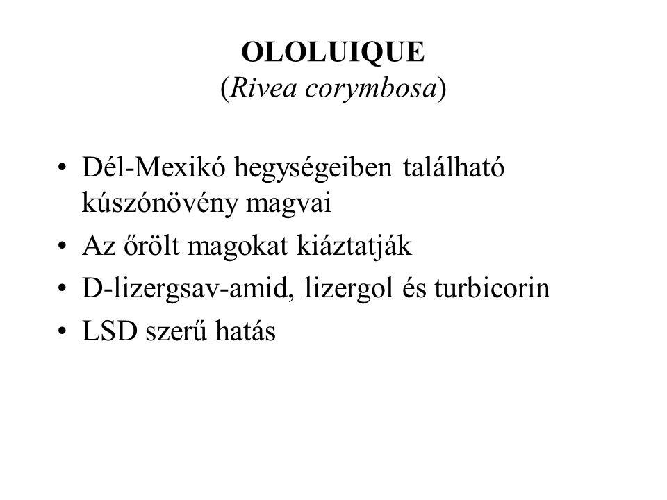 OLOLUIQUE (Rivea corymbosa)