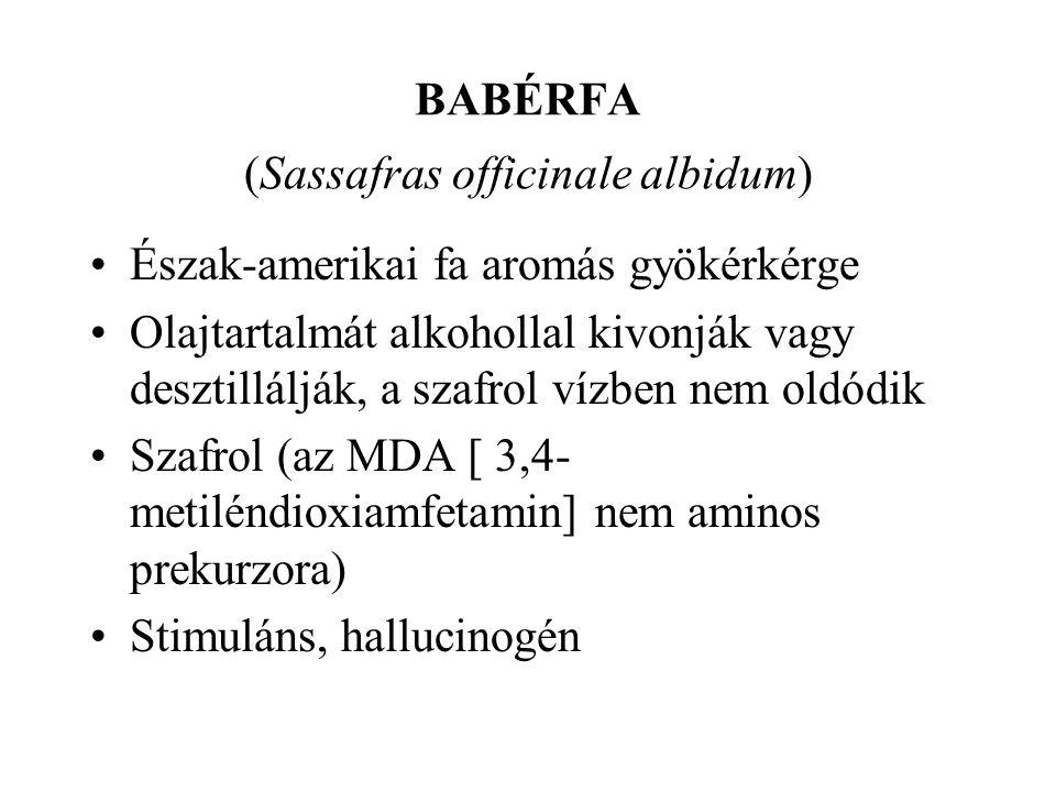BABÉRFA (Sassafras officinale albidum)